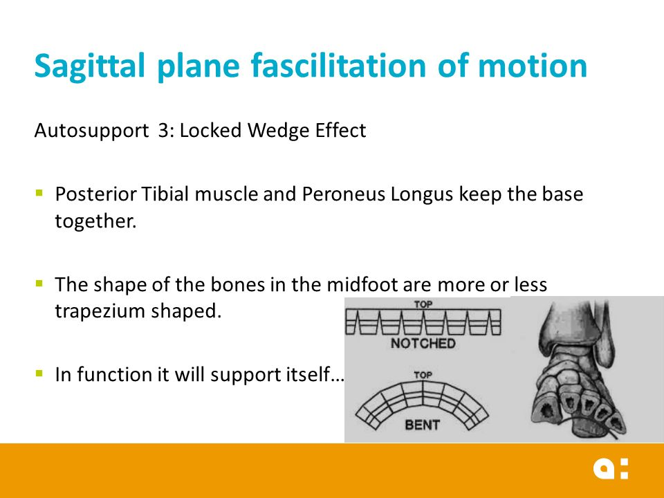 Sagittal plane fascilitation of motion