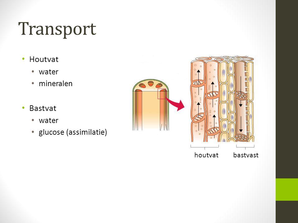 Transport Houtvat Bastvat water mineralen glucose (assimilatie)