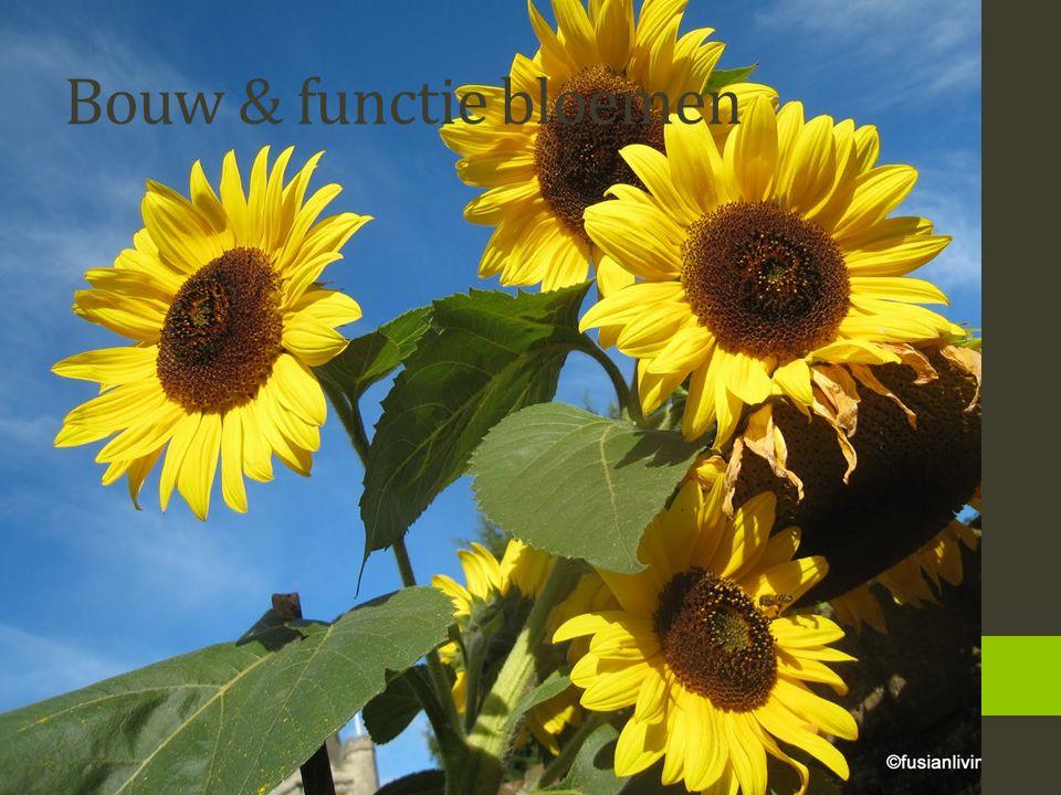 Bouw & functie bloemen