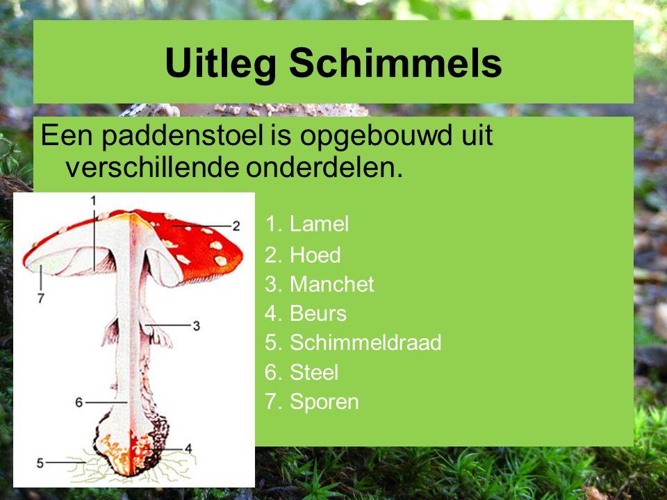 Uitleg Schimmels Een paddenstoel is opgebouwd uit verschillende onderdelen. 1. Lamel. 2. Hoed. 3. Manchet.