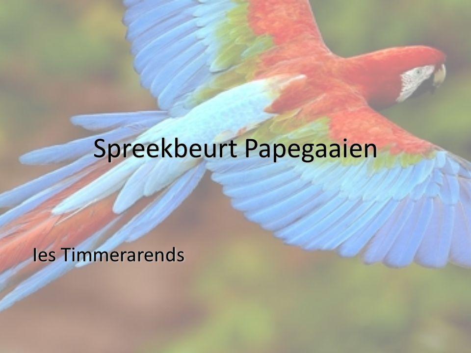 Spreekbeurt Papegaaien