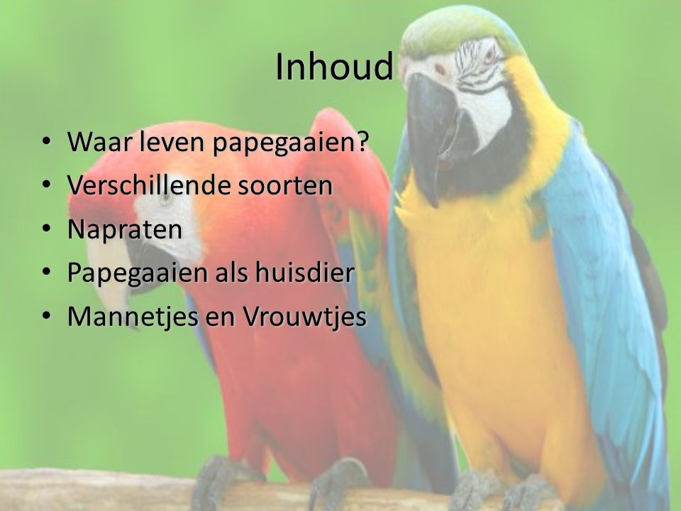 Inhoud Waar leven papegaaien Verschillende soorten Napraten