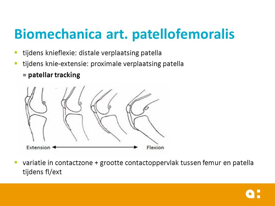 Biomechanica art. patellofemoralis