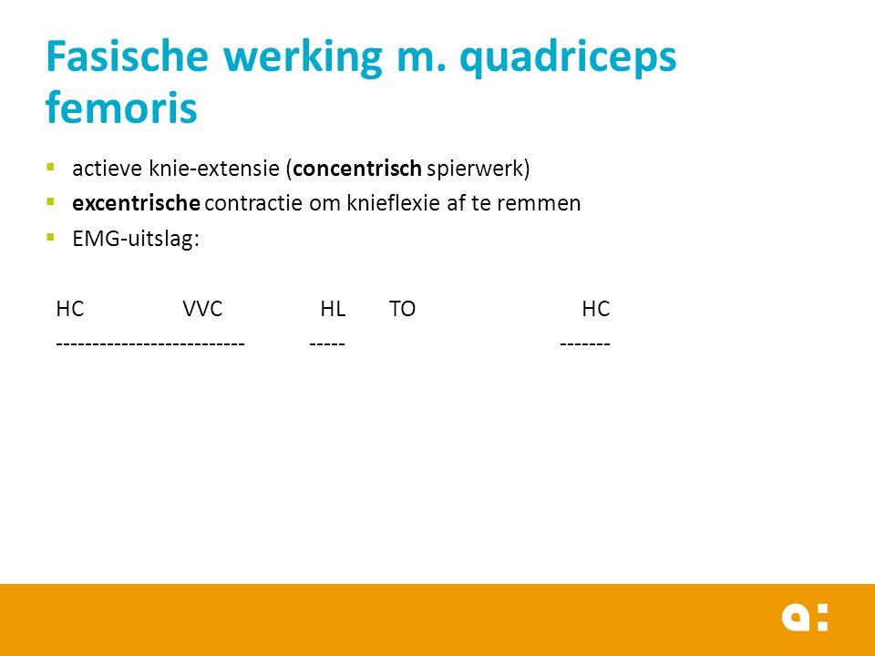 Fasische werking m. quadriceps femoris