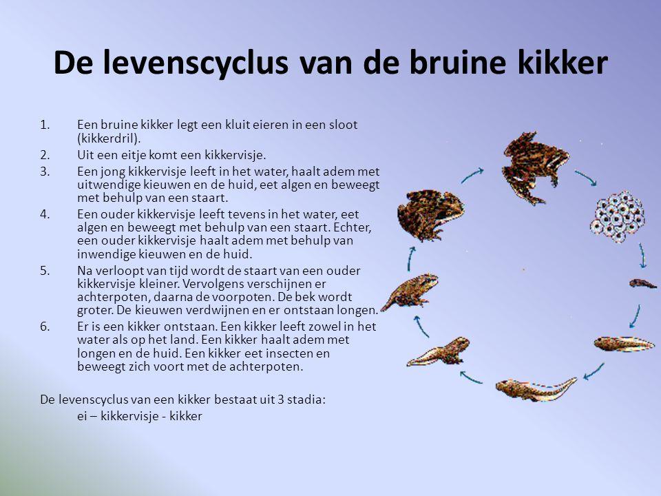 De levenscyclus van de bruine kikker