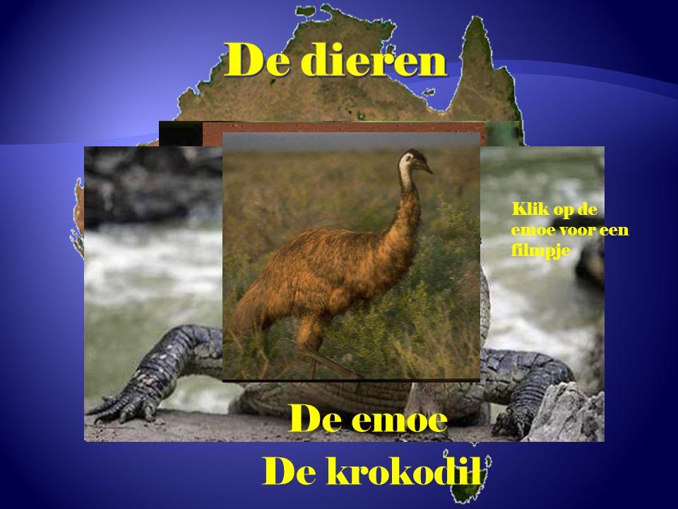 De dieren De dingo De koala De kangoeroe De emoe De krokodil