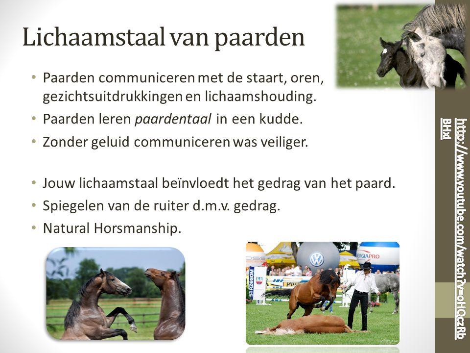 Lichaamstaal van paarden