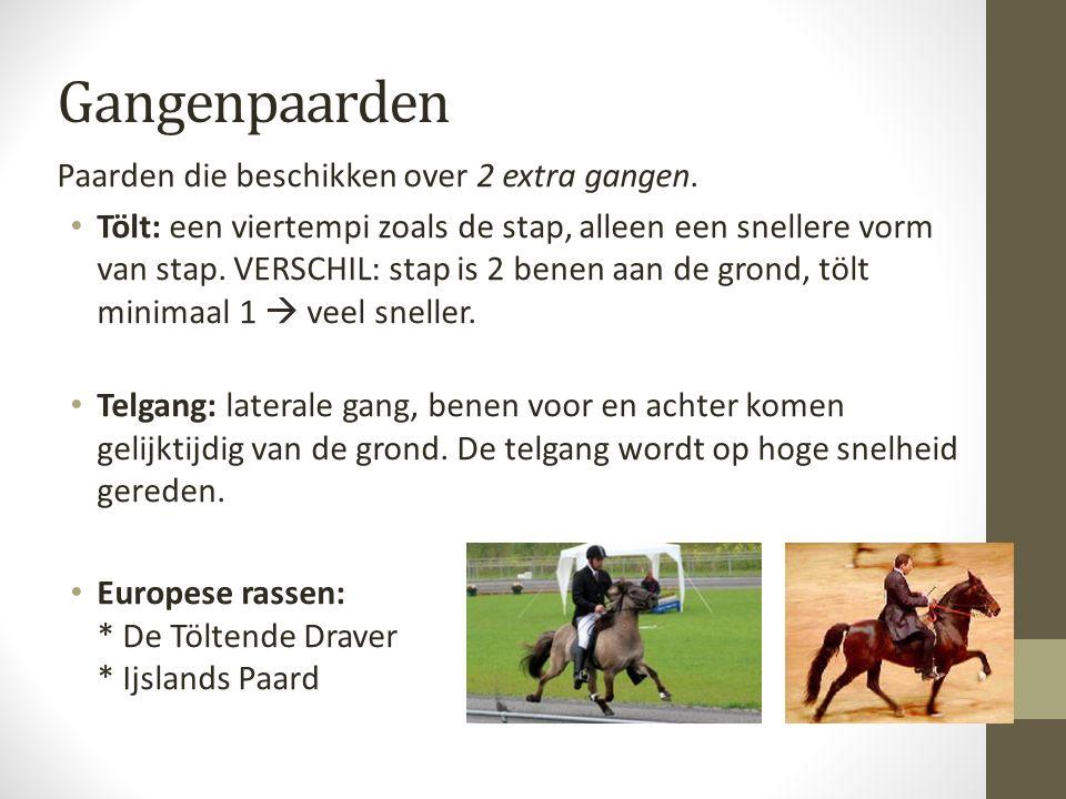 Gangenpaarden Paarden die beschikken over 2 extra gangen.
