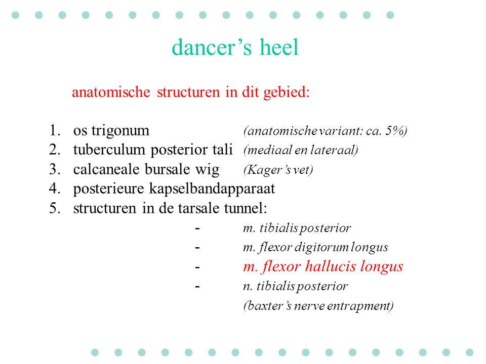 dancer's heel anatomische structuren in dit gebied: