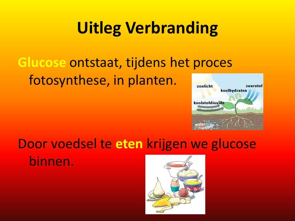 Uitleg Verbranding Glucose ontstaat, tijdens het proces fotosynthese, in planten.