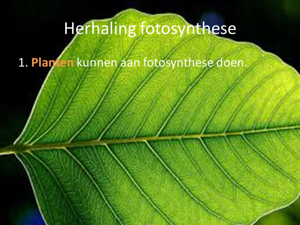 Herhaling fotosynthese
