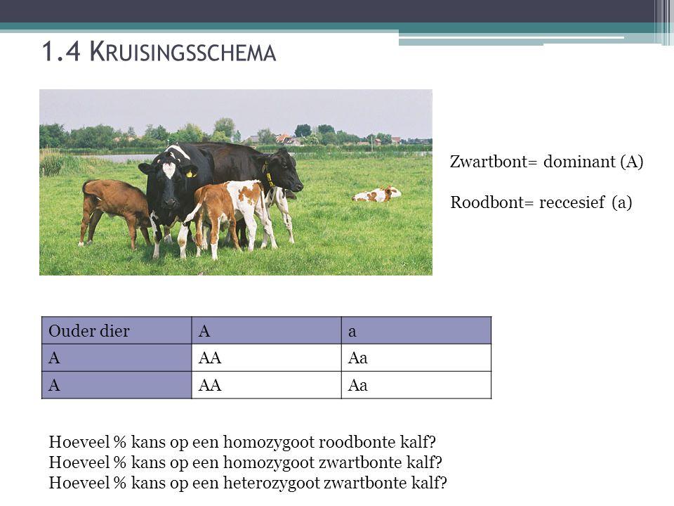 1.4 Kruisingsschema Zwartbont= dominant (A) Roodbont= reccesief (a)