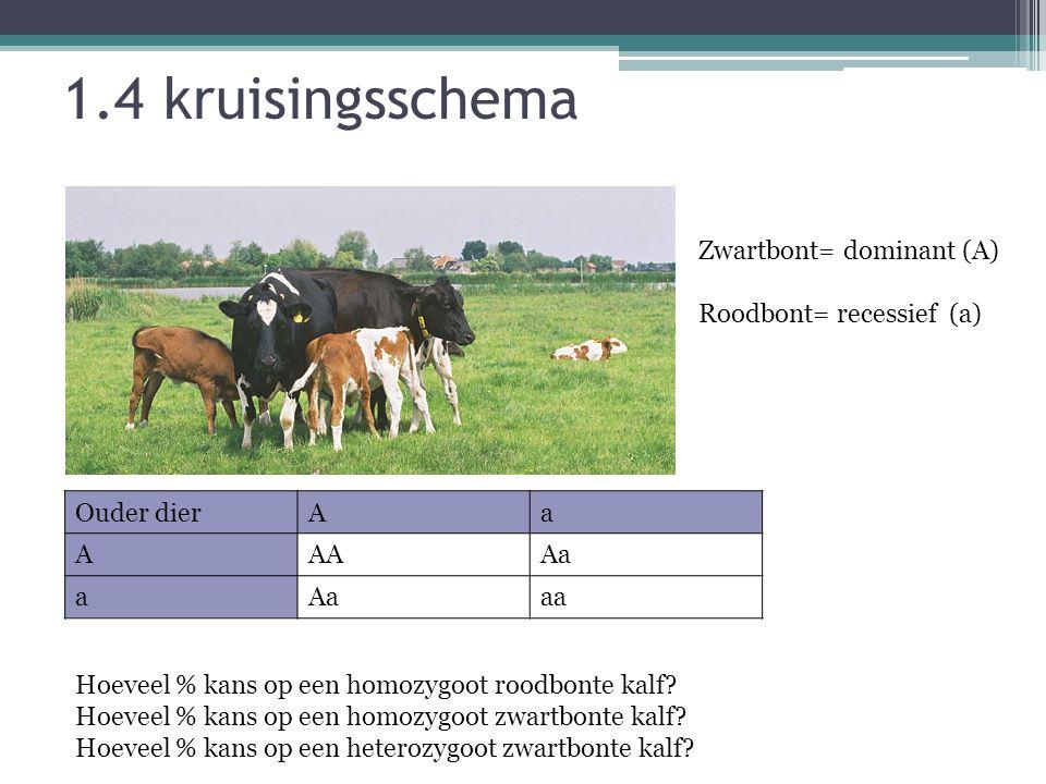 1.4 kruisingsschema Zwartbont= dominant (A) Roodbont= recessief (a)