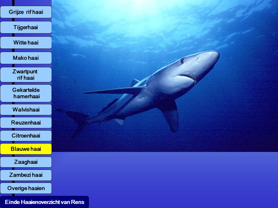 Einde Haaienoverzicht van Rens