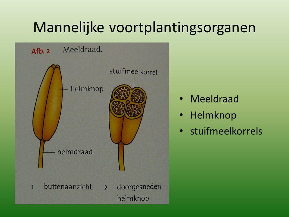 Mannelijke voortplantingsorganen