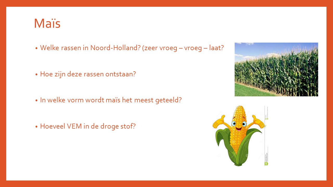 Maïs Welke rassen in Noord-Holland (zeer vroeg – vroeg – laat