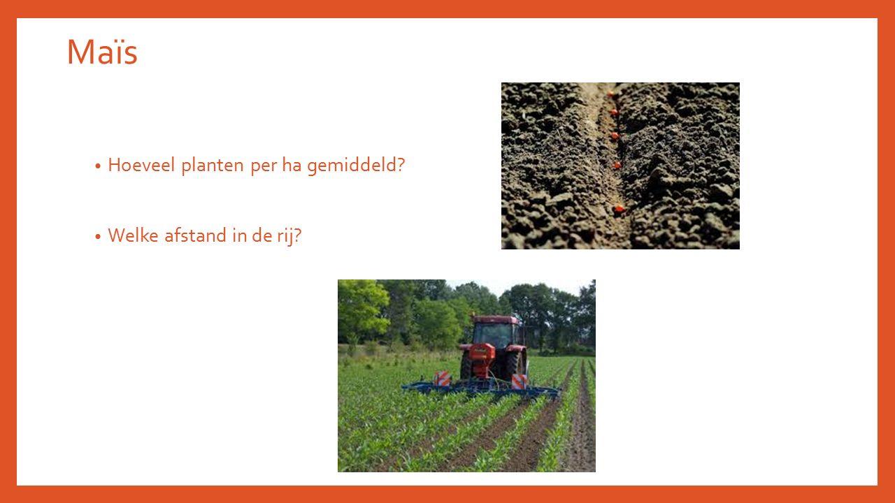 Maïs Hoeveel planten per ha gemiddeld Welke afstand in de rij