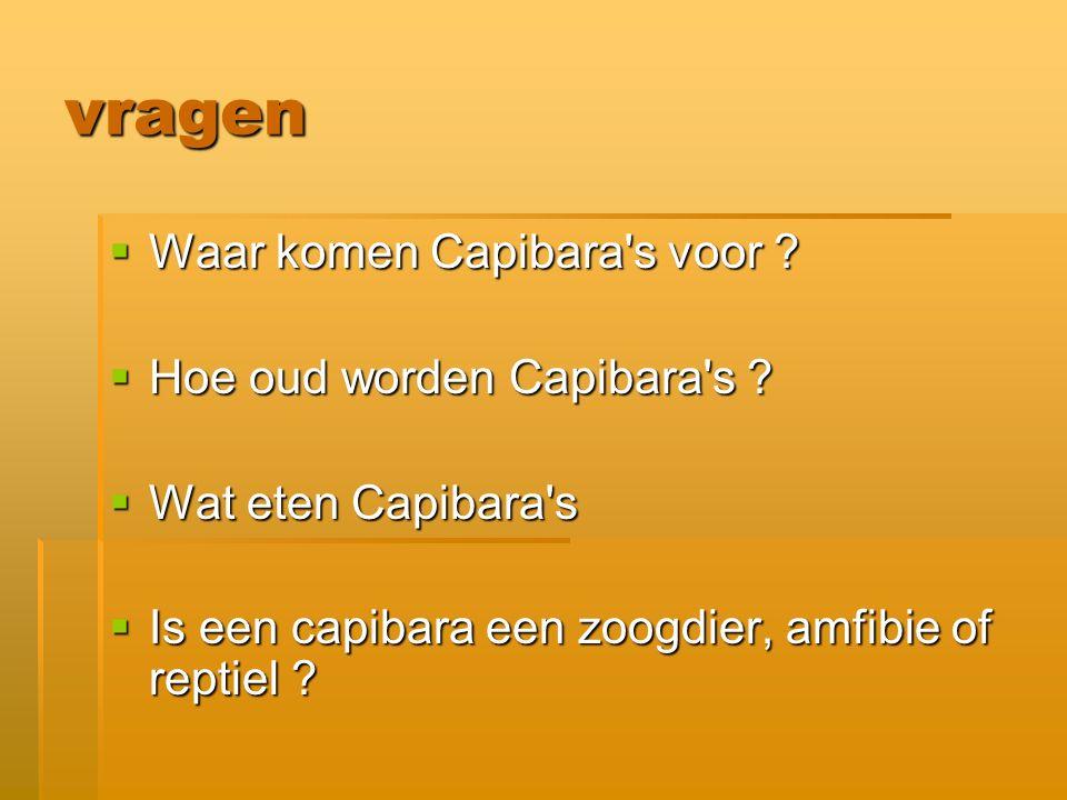 vragen Waar komen Capibara s voor Hoe oud worden Capibara s