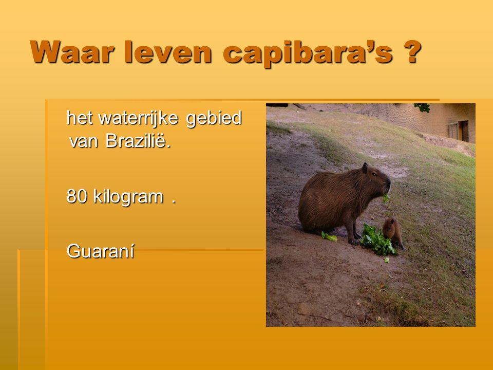 Waar leven capibara's het waterrijke gebied van Brazilië.