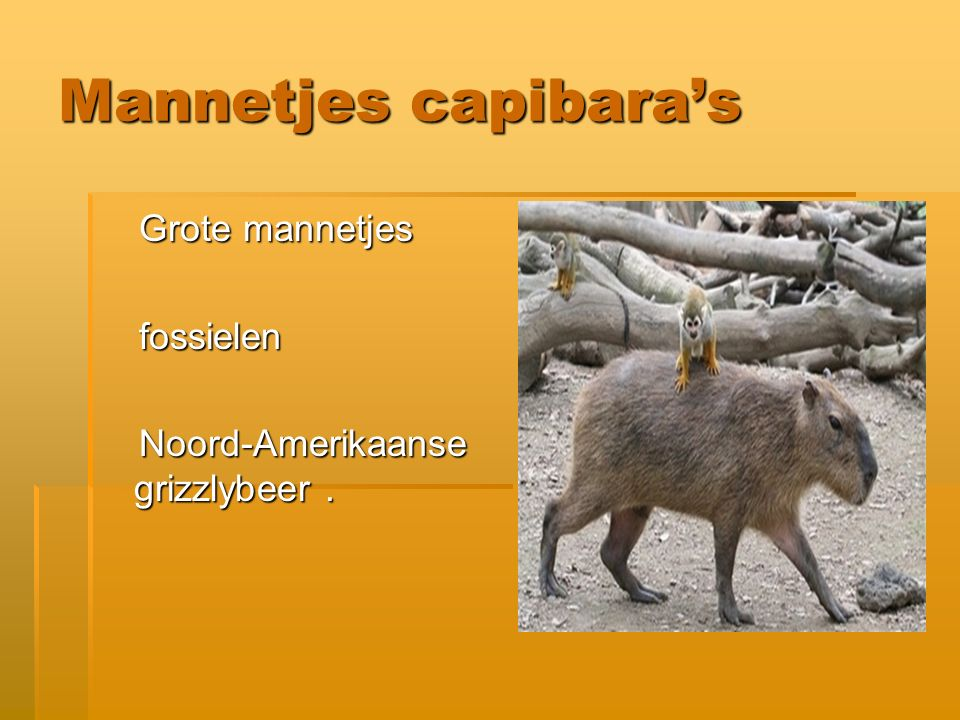 Mannetjes capibara's Grote mannetjes fossielen