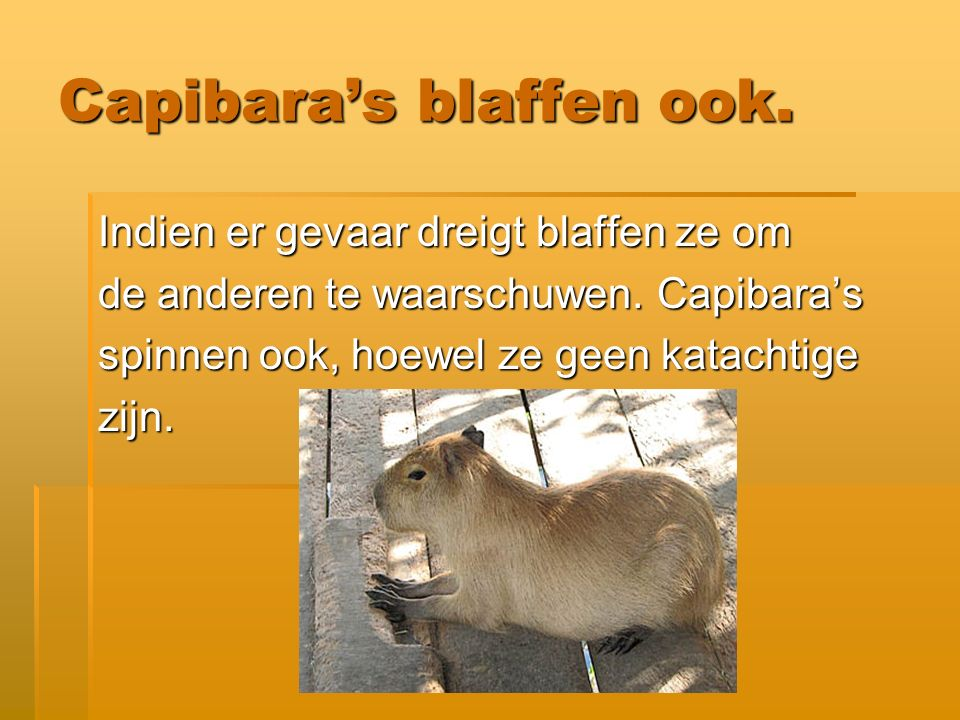 Capibara's blaffen ook.