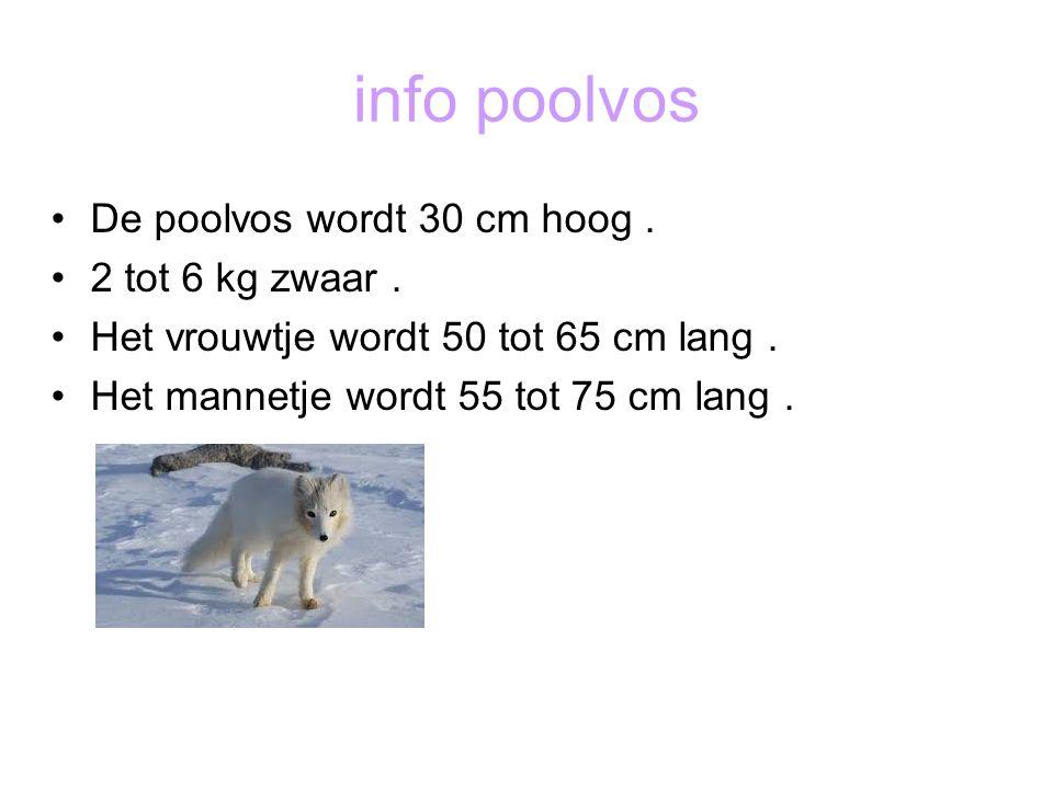 info poolvos De poolvos wordt 30 cm hoog . 2 tot 6 kg zwaar .