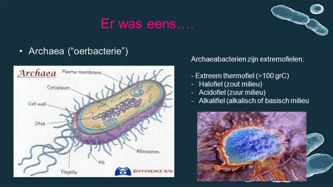 Er was eens…. Archaea ( oerbacterie )
