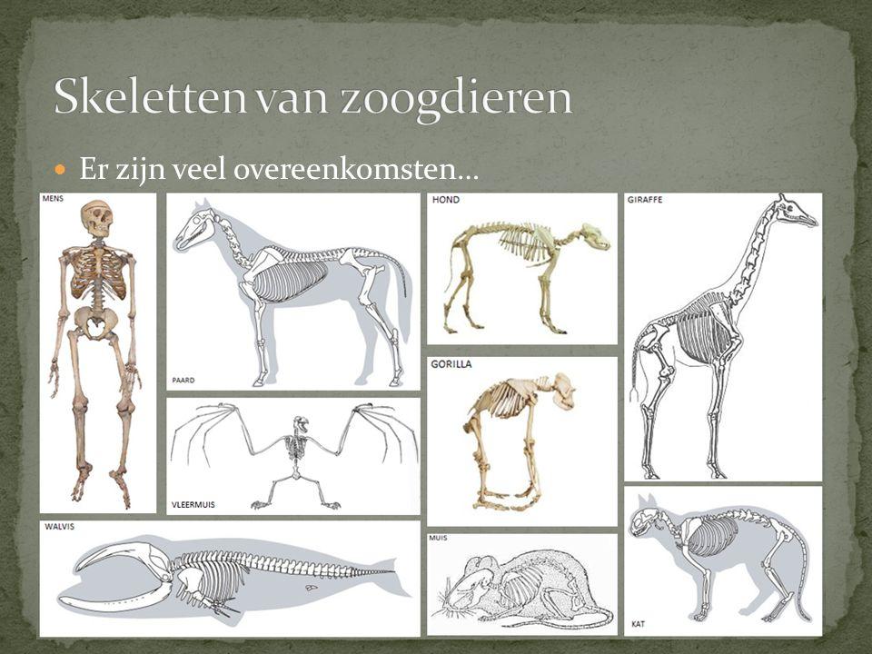 Skeletten van zoogdieren