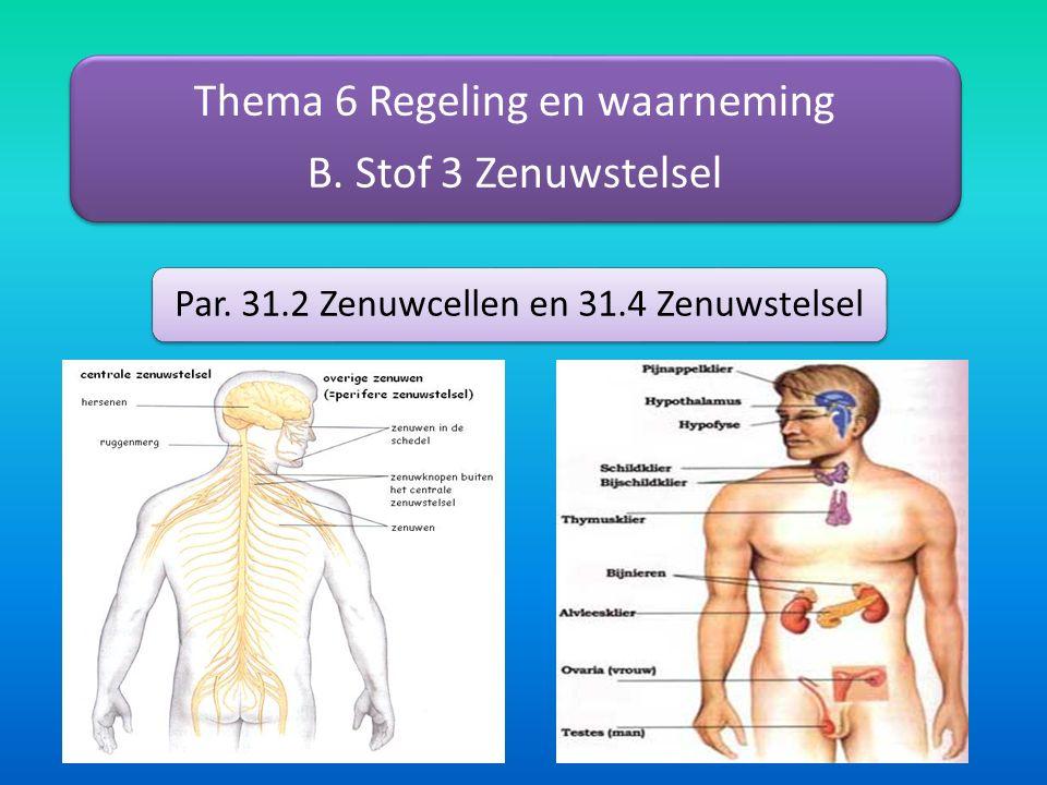 Thema 6 Regeling en waarneming B. Stof 3 Zenuwstelsel