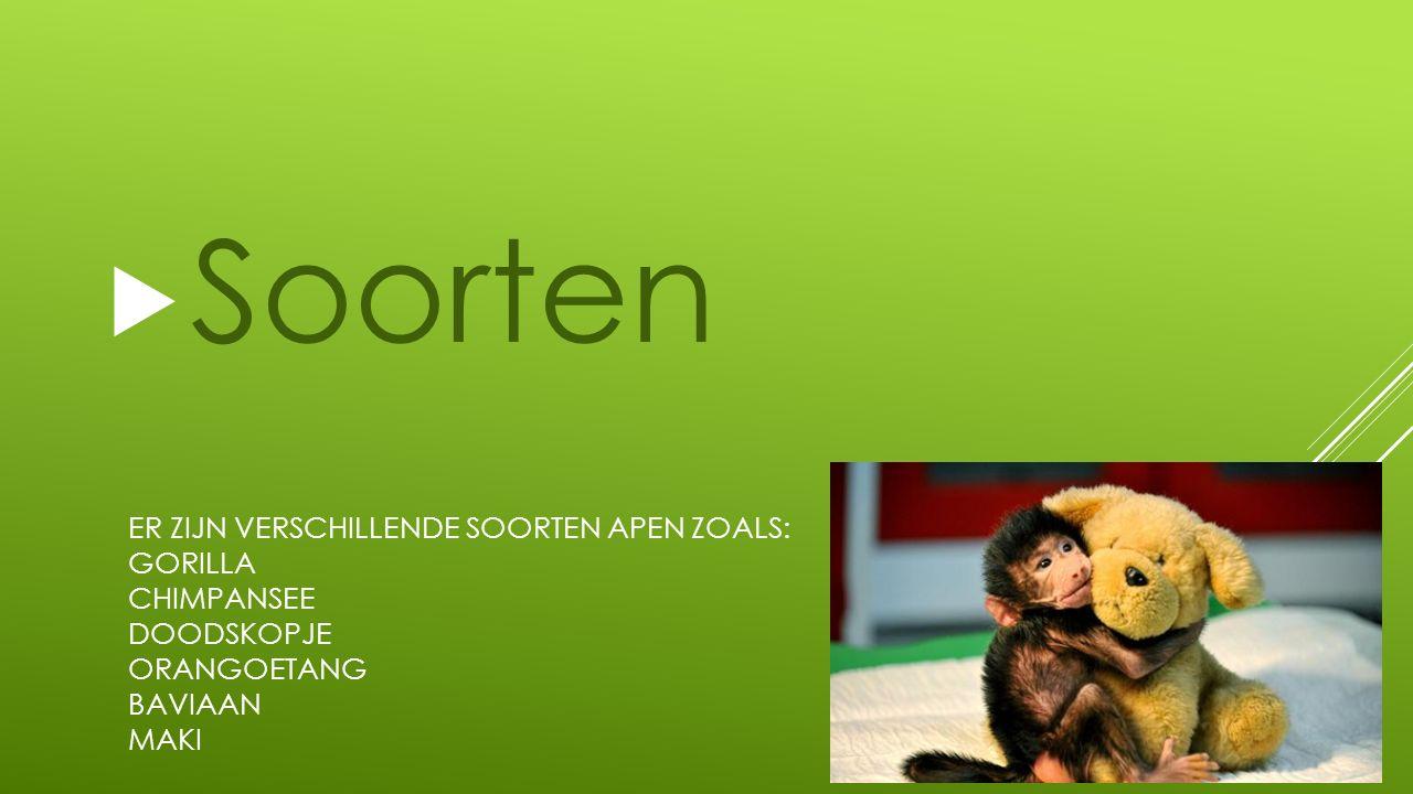 Soorten Er zijn verschillende soorten apen zoals: Gorilla Chimpansee Doodskopje orangoetang Baviaan Maki.