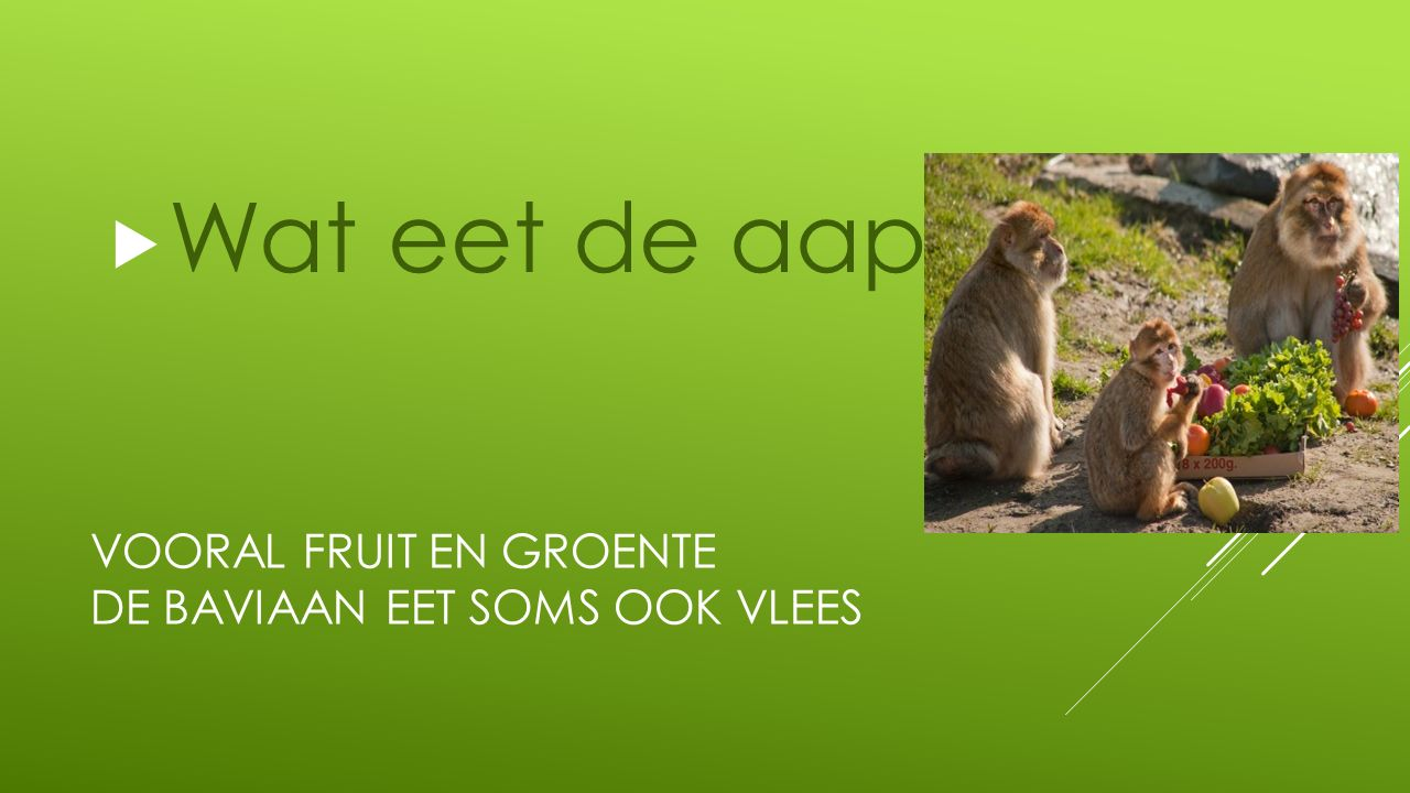 Vooral Fruit en groente De baviaan eet soms ook vlees