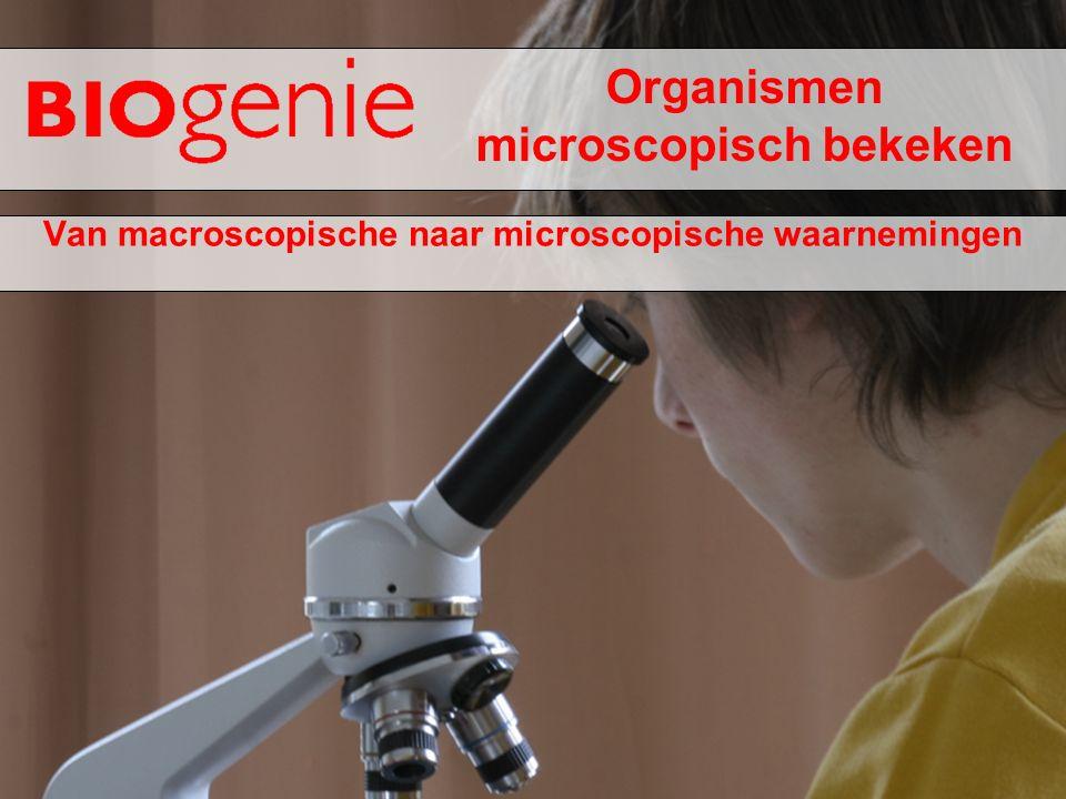 Organismen microscopisch bekeken