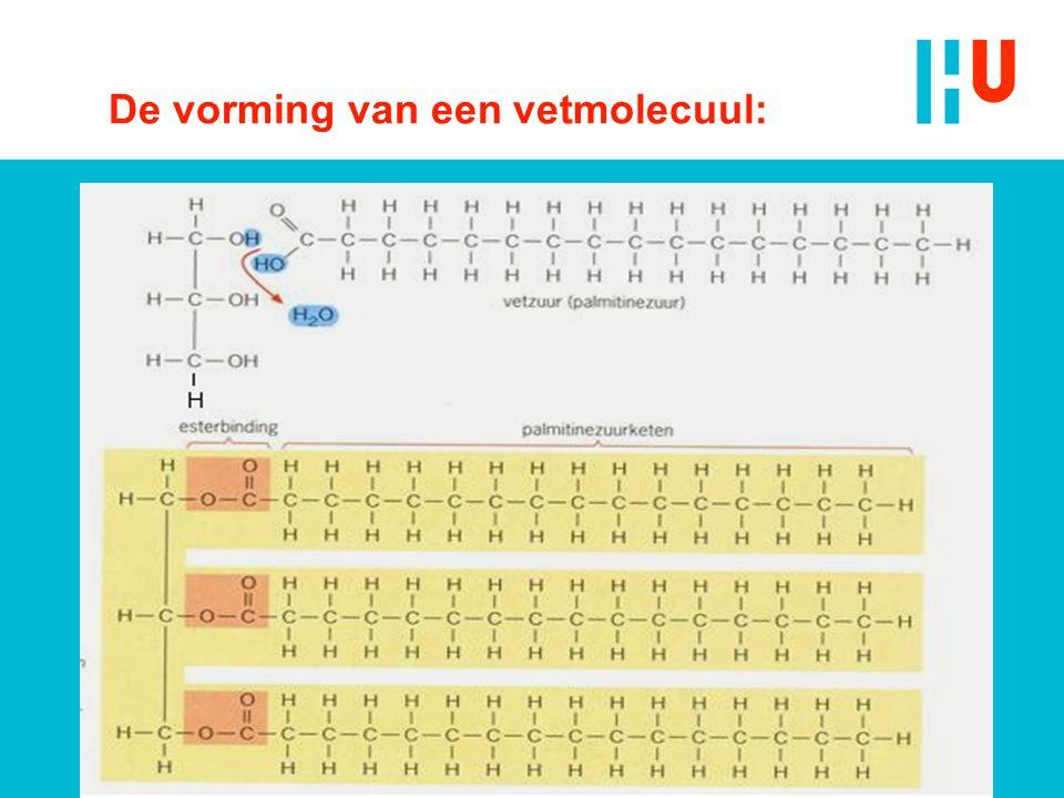 De vorming van een vetmolecuul: