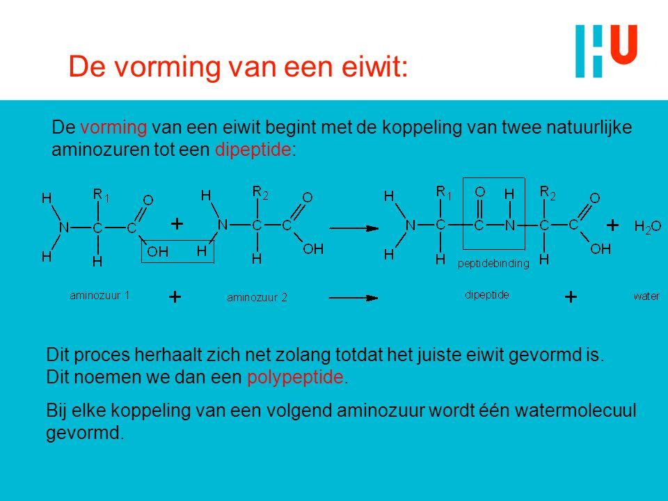 De vorming van een eiwit: