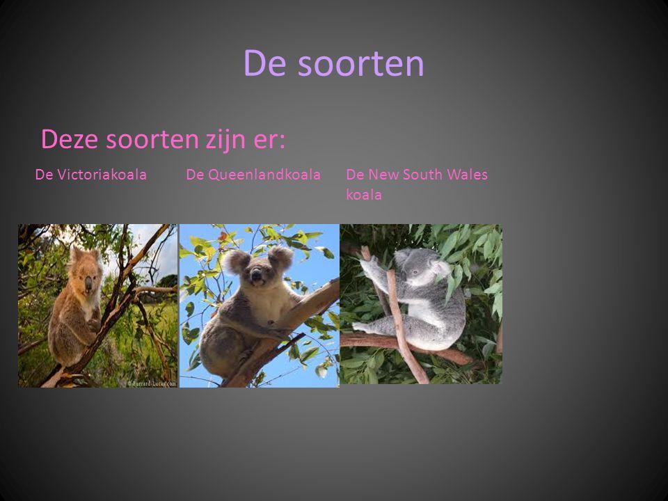 De soorten Deze soorten zijn er: De Victoriakoala De Queenlandkoala