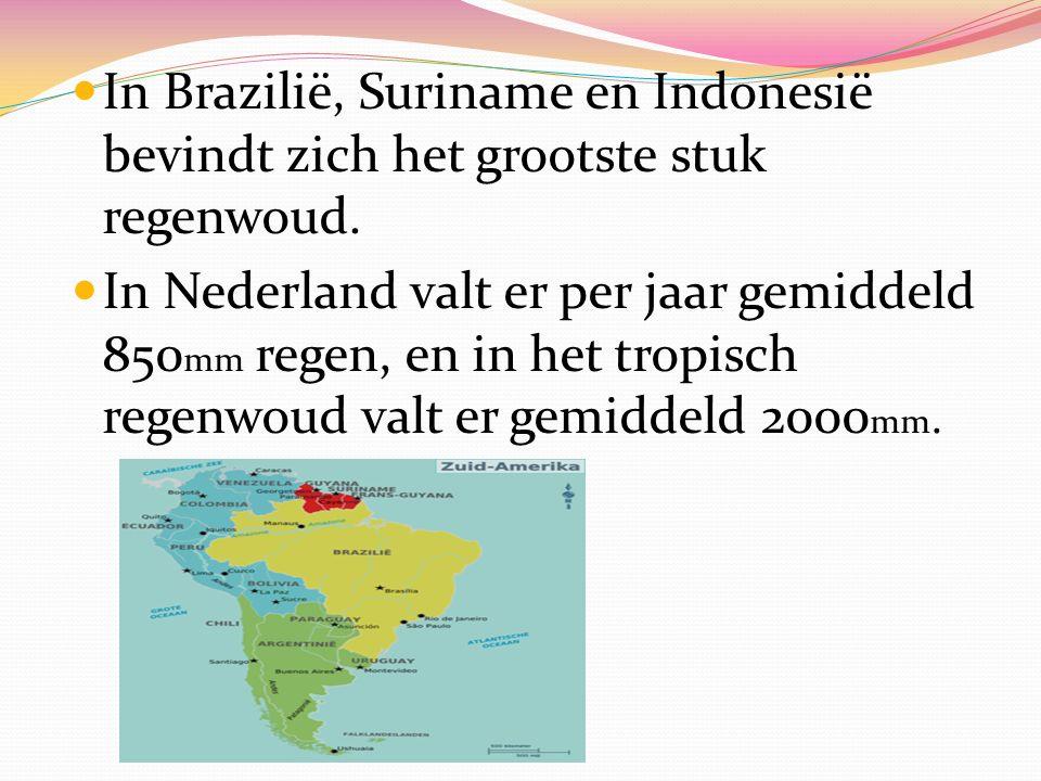In Brazilië, Suriname en Indonesië bevindt zich het grootste stuk regenwoud.