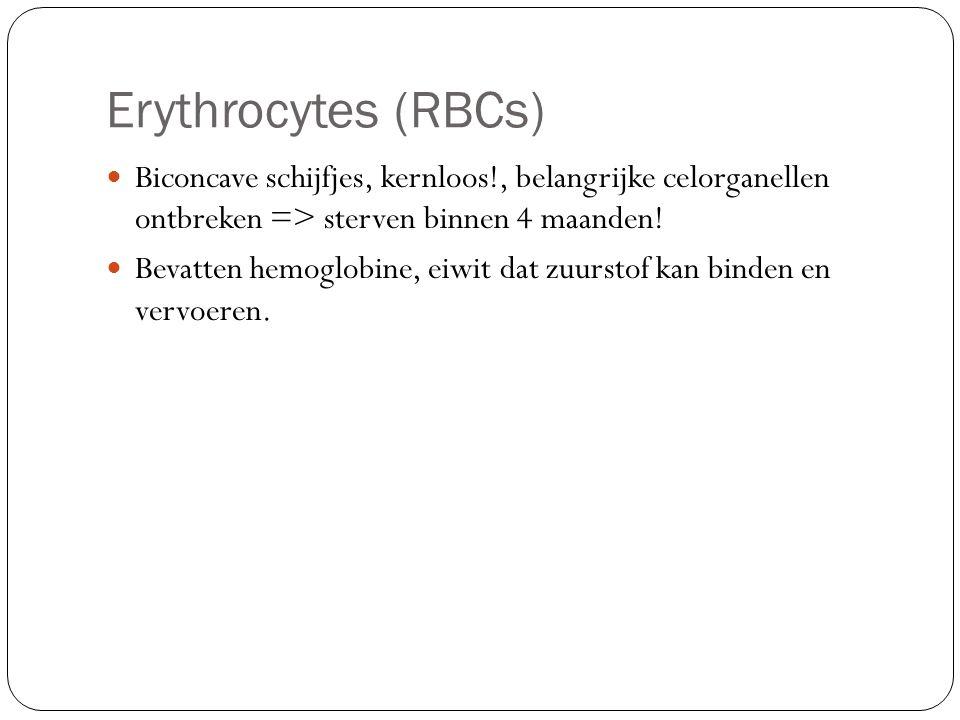 Erythrocytes (RBCs) Biconcave schijfjes, kernloos!, belangrijke celorganellen ontbreken => sterven binnen 4 maanden!
