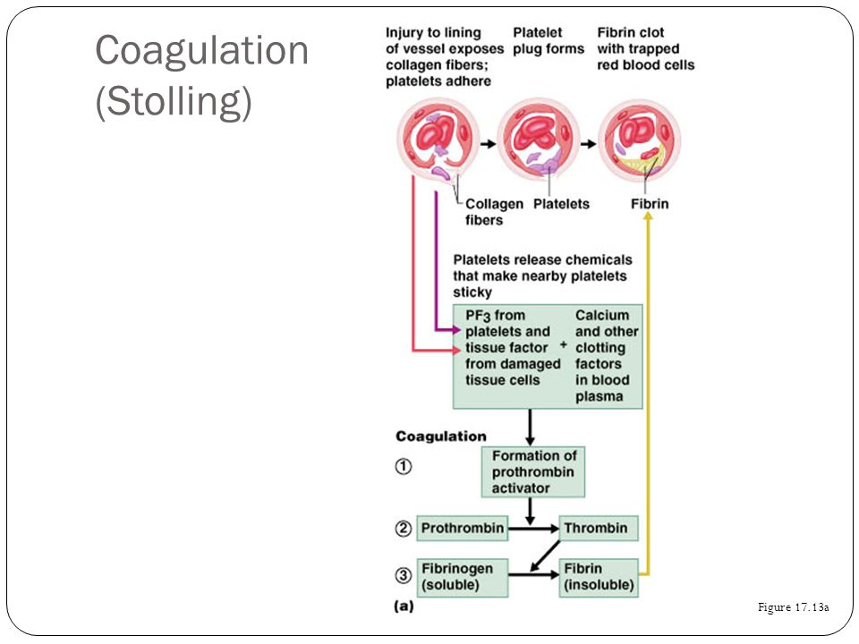 Coagulation (Stolling)