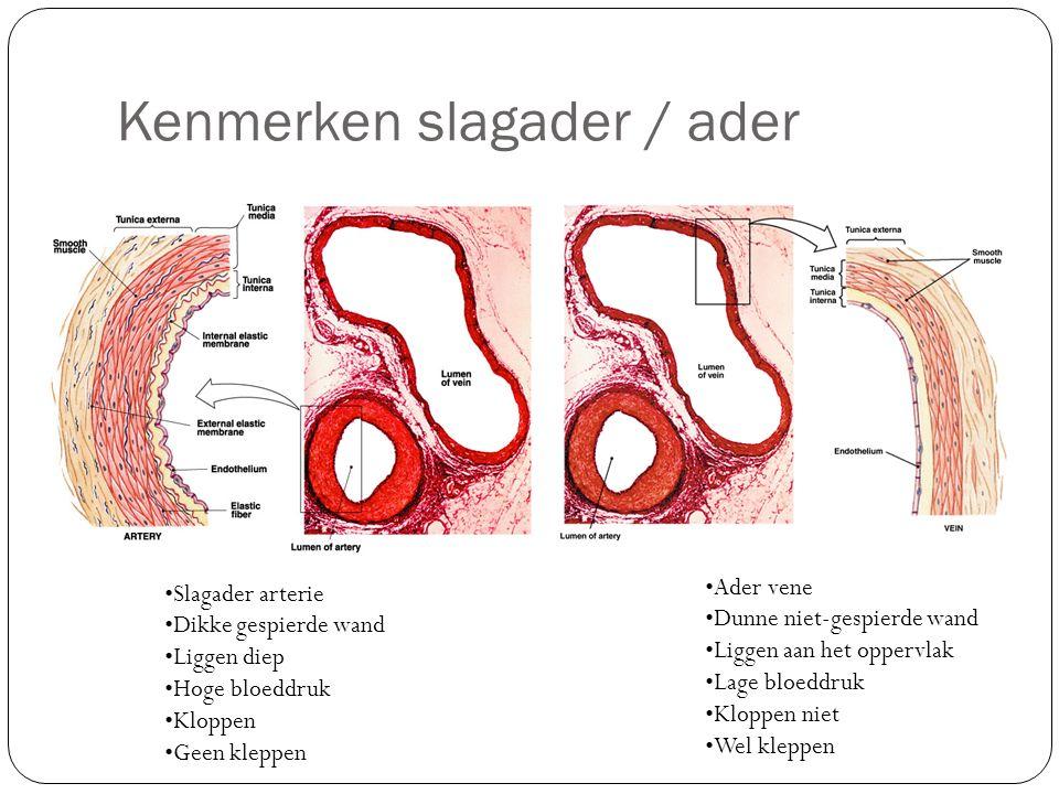 Kenmerken slagader / ader