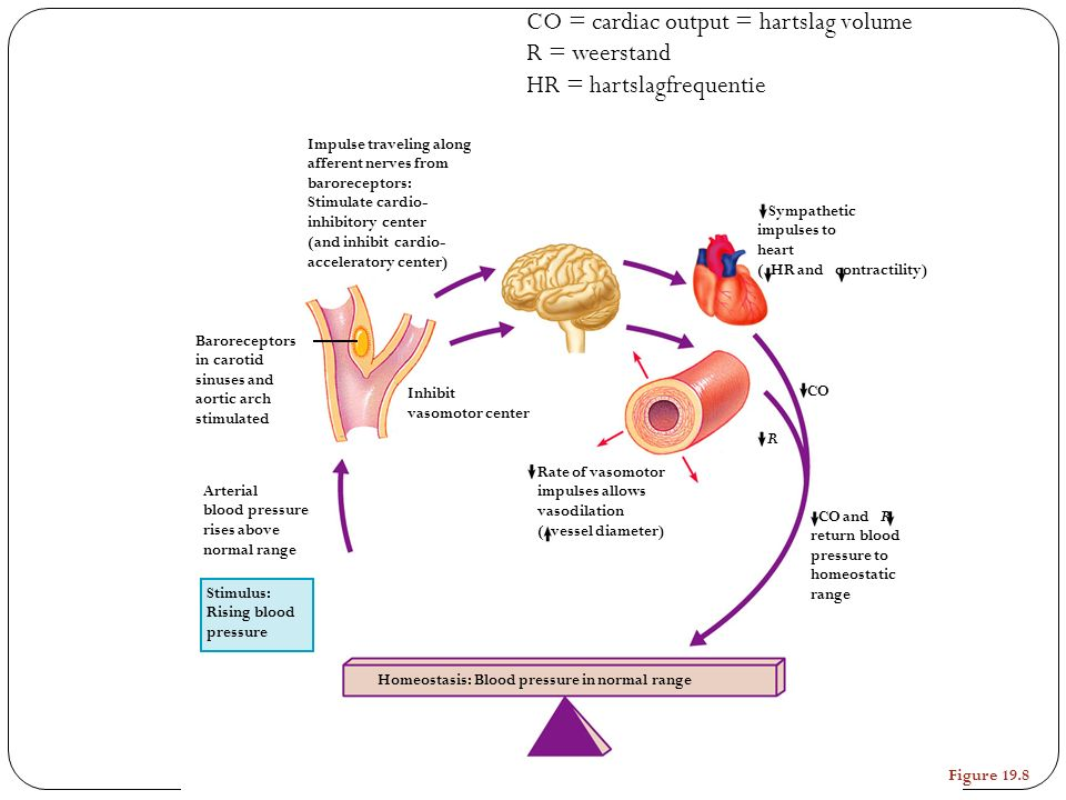 CO = cardiac output = hartslag volume R = weerstand