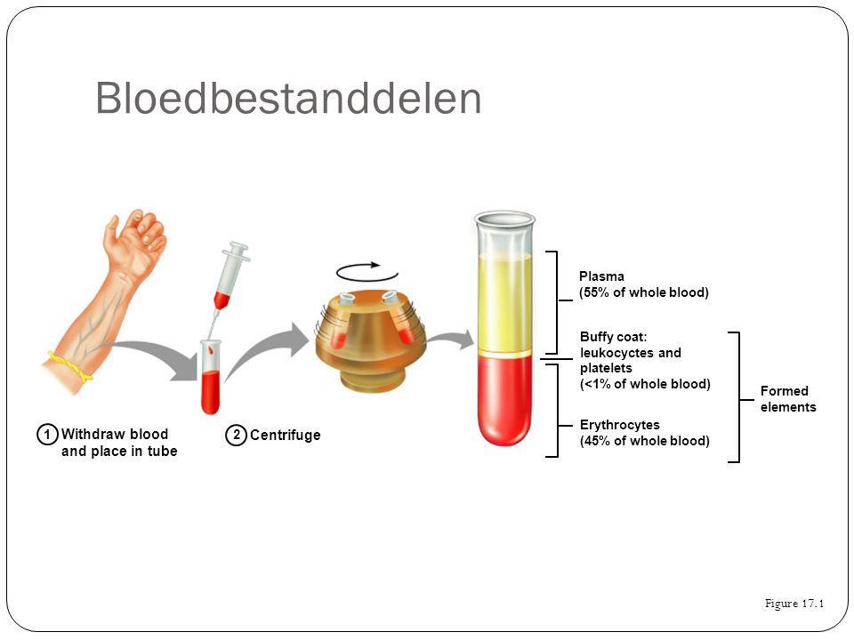 Bloedbestanddelen Withdraw blood and place in tube Centrifuge
