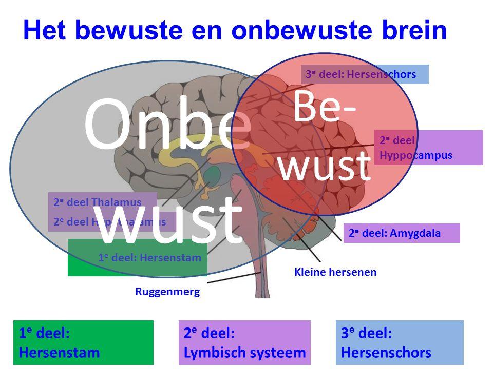 Onbewust Be-wust Het bewuste en onbewuste brein 1e deel: Hersenstam