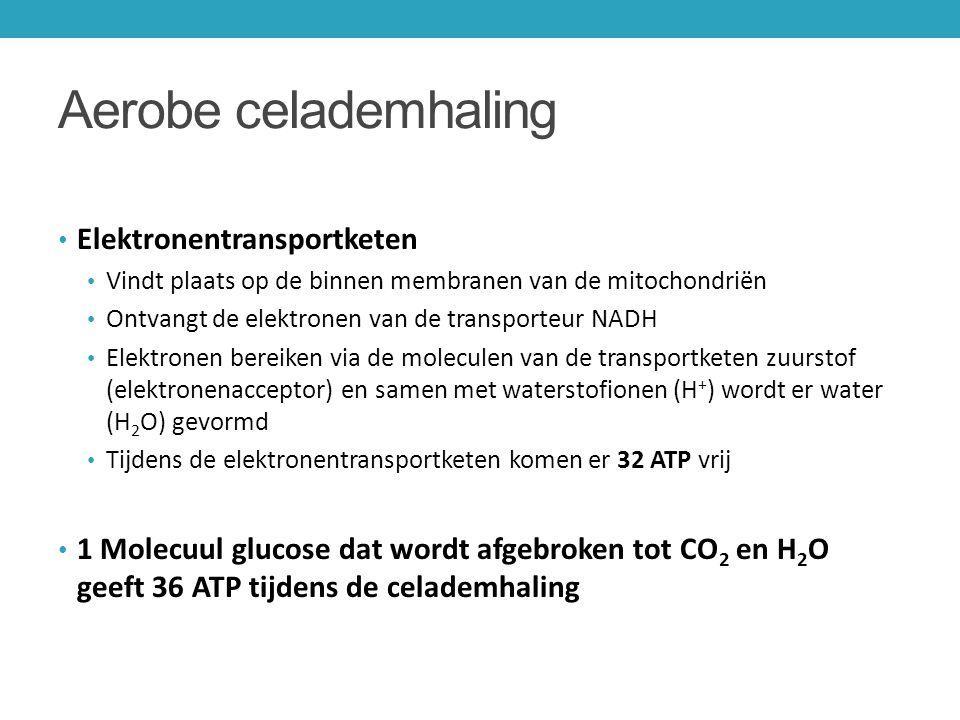 Aerobe celademhaling Elektronentransportketen