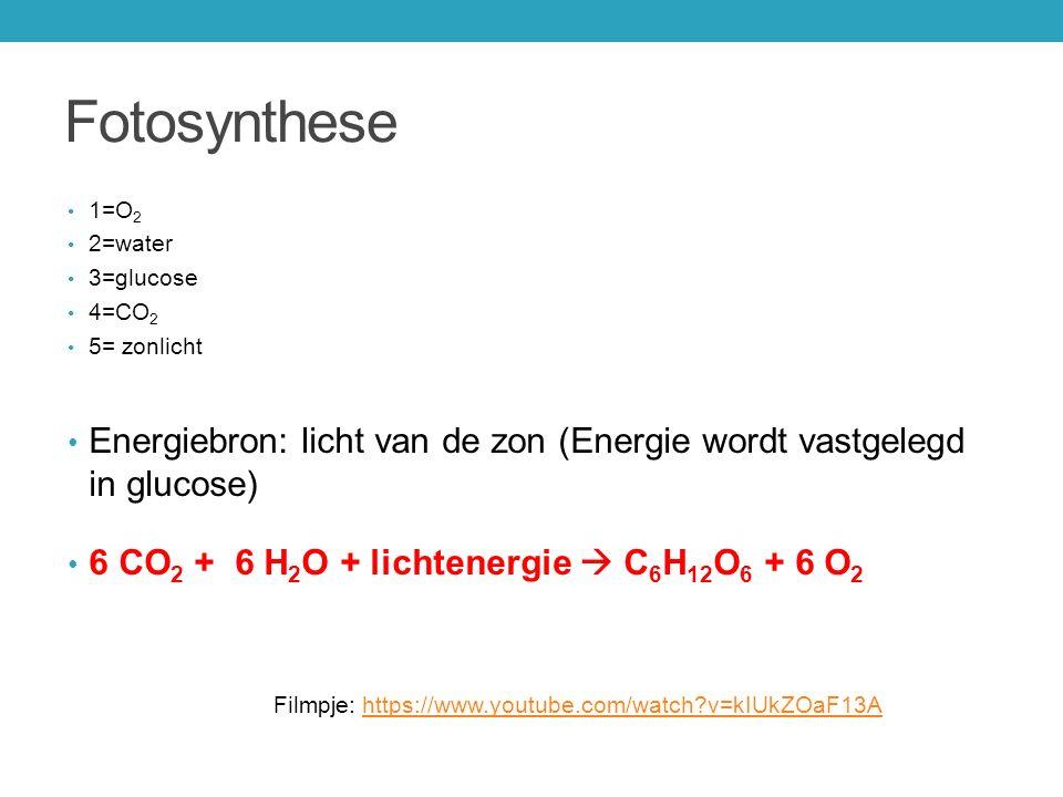 Fotosynthese 1=O2. 2=water. 3=glucose. 4=CO2. 5= zonlicht. Energiebron: licht van de zon (Energie wordt vastgelegd in glucose)
