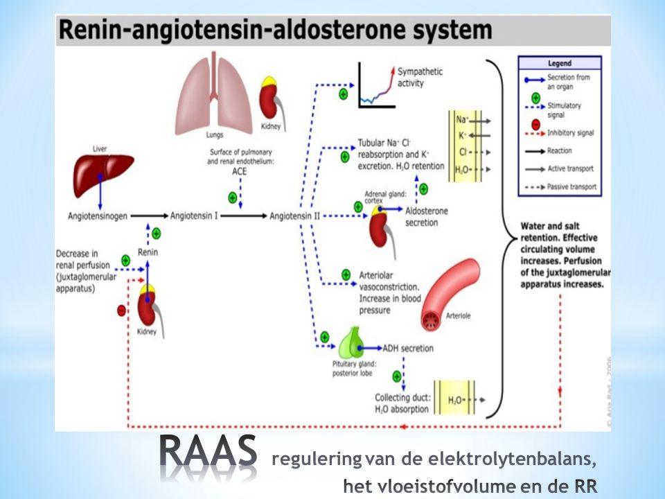 RAAS regulering van de elektrolytenbalans, het vloeistofvolume en de RR