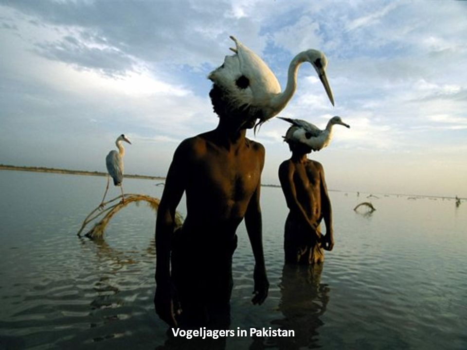 Vogeljagers in Pakistan