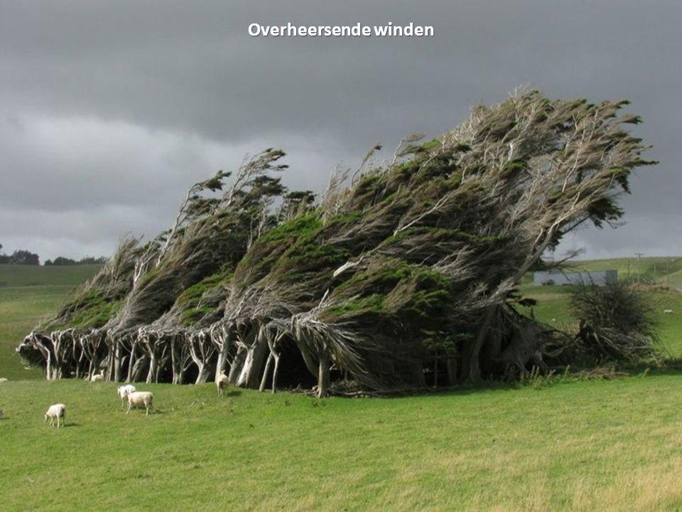 Overheersende winden