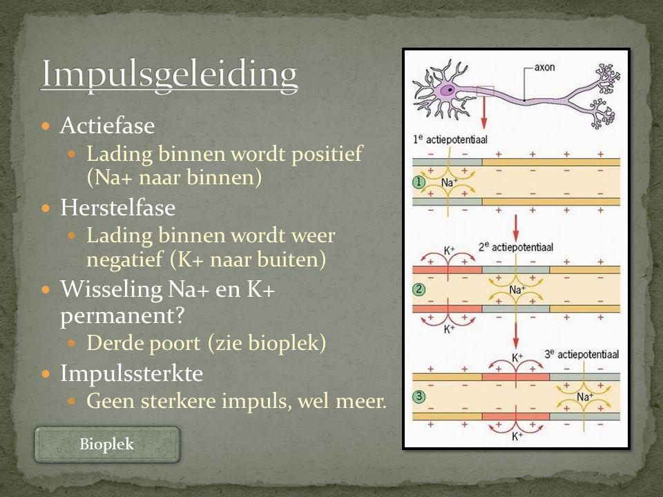 Impulsgeleiding Actiefase Herstelfase Wisseling Na+ en K+ permanent