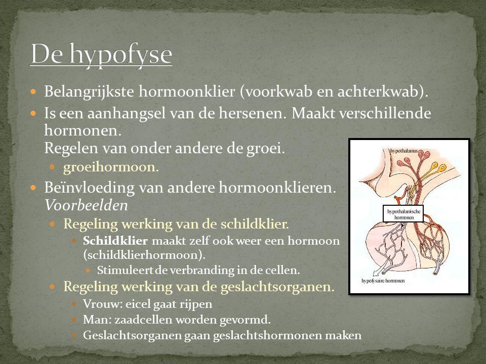 De hypofyse Belangrijkste hormoonklier (voorkwab en achterkwab).