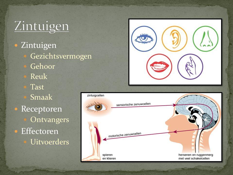 Zintuigen Zintuigen Receptoren Effectoren Gezichtsvermogen Gehoor Reuk